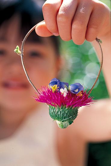 アザミの花籠