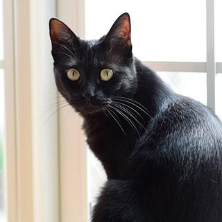 優しさと思いやりにあふれた黒猫〔#家庭画報ウチもふ365〕