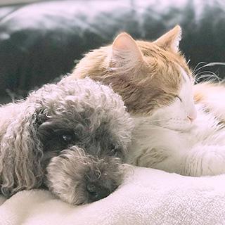 犬と猫そして兎が仲良く暮らしています〔#家庭画報ウチもふ365〕