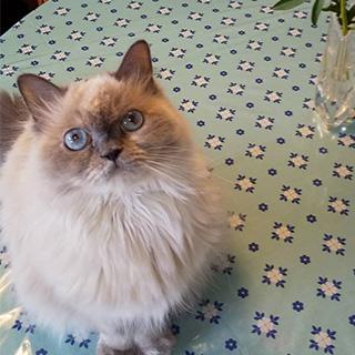 青い瞳のとってもスウィートな女の子〔#家庭画報ウチもふ365〕