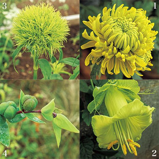 カンボ・ガーデンズ 緑の花