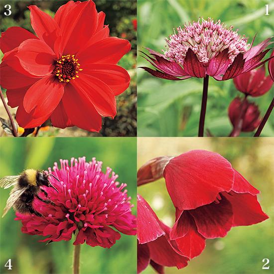 カンボ・ガーデンズ 赤い花