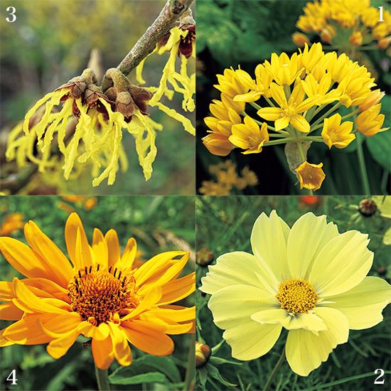 カンボ・ガーデンズ 黄色い花