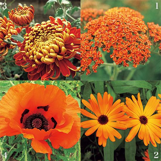 カンボ・ガーデンズ オレンジの花