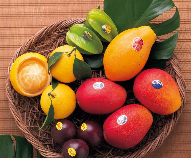 「フルーツ大野」の宮崎県産の旬の果物