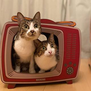 いついかなるときも一緒の2匹〔#家庭画報ウチもふ365〕