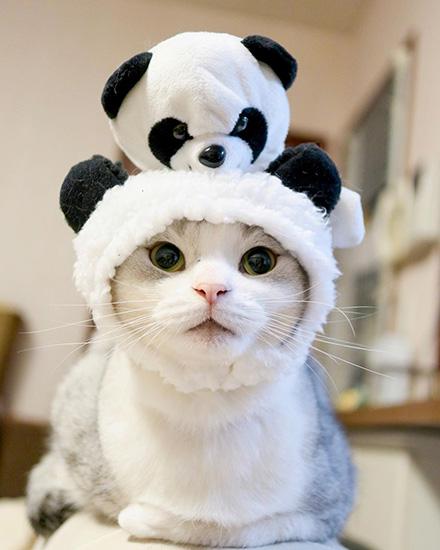 ウチもふにパンダさんが登場!