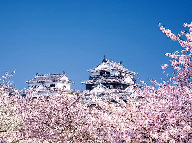 【鞆の浦・尾道としまなみ海道桜巡り3日間】瀬戸内の多島美と桜が紡ぐ春の絶景