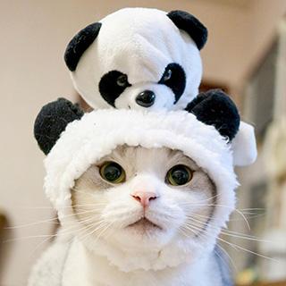 ウチもふにパンダさんが登場!〔#家庭画報ウチもふ365〕