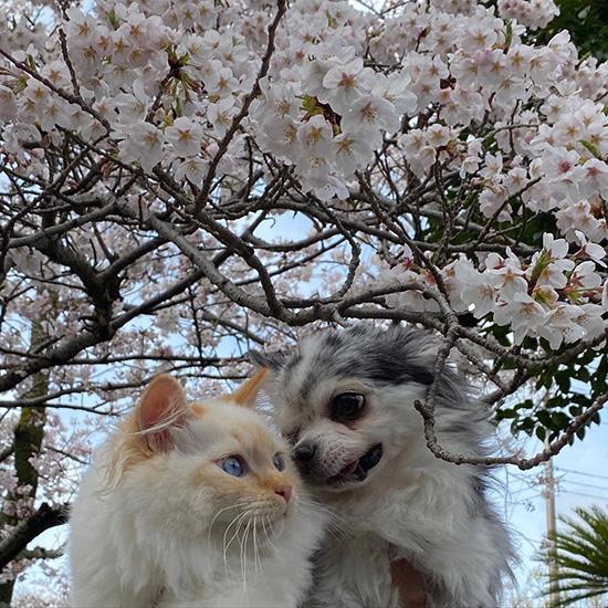 犬と猫、仲良く暮らしています