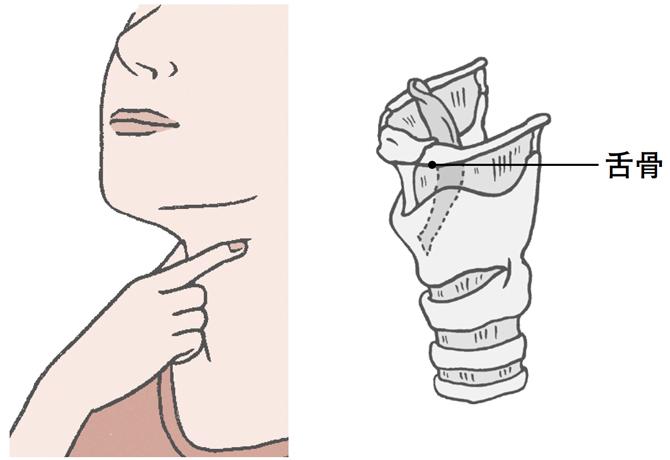舌骨を触る