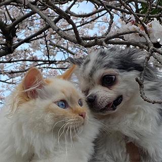 犬と猫、仲良く暮らしています〔#家庭画報ウチもふ365〕