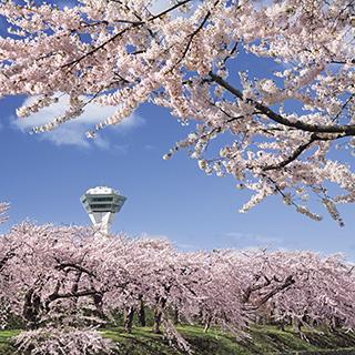 【道南の桜名所を巡る3日間】北国の桜絶景と春の幸に出会う