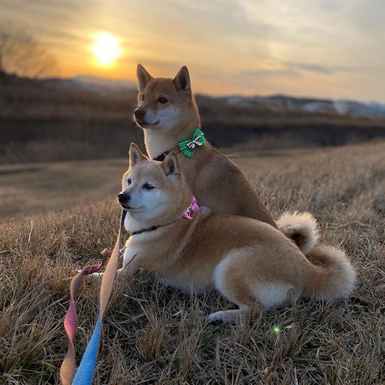美しい夕日を愛犬と眺める幸せ