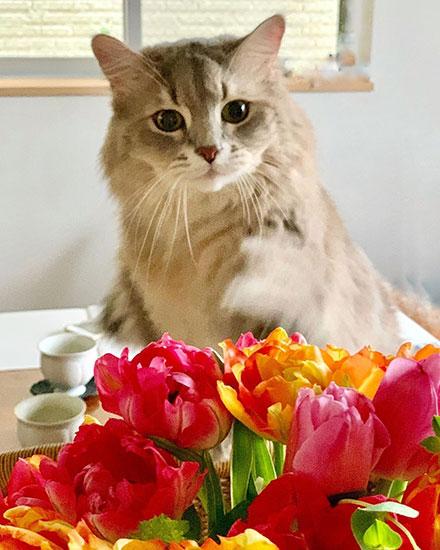 猫じゃらしよりも大好きなものは……