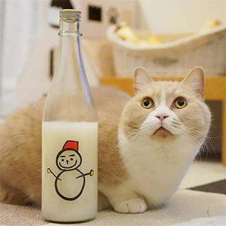 本日はこの日本酒がおすすめです〔#家庭画報ウチもふ365〕
