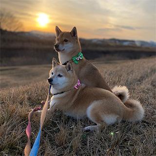 美しい夕日を愛犬と眺める幸せ〔#家庭画報ウチもふ365〕
