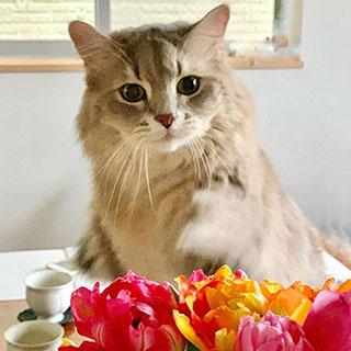 猫じゃらしよりも大好きなものは……〔#家庭画報ウチもふ365〕