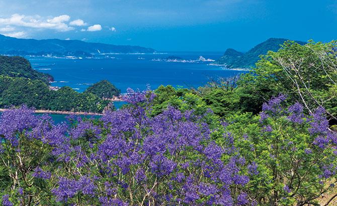 【日南海岸と霧島・えびの高原・鹿児島3日間】南九州の初夏を彩る花巡り