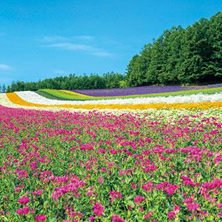 【北海道ガーデン街道3日間】北の大地が育む麗しい花園へ