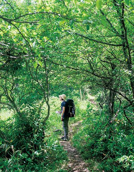 森に憩う、森に遊ぶ