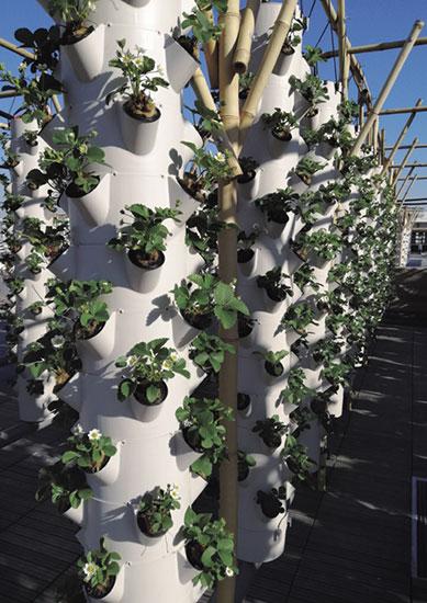 欧州最大の屋上菜園 ナチュール・ユーベンヌ