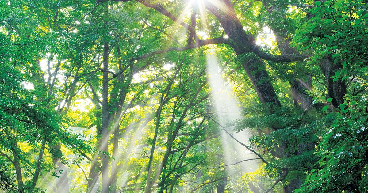 自然がくれる癒やしの力 日本の「新緑遺産」