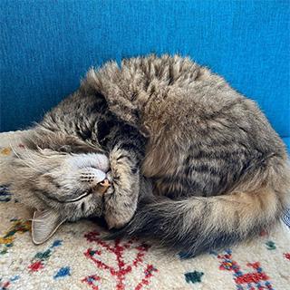 まさに「寝子」。安心して熟睡しています〔#家庭画報ウチもふ365〕