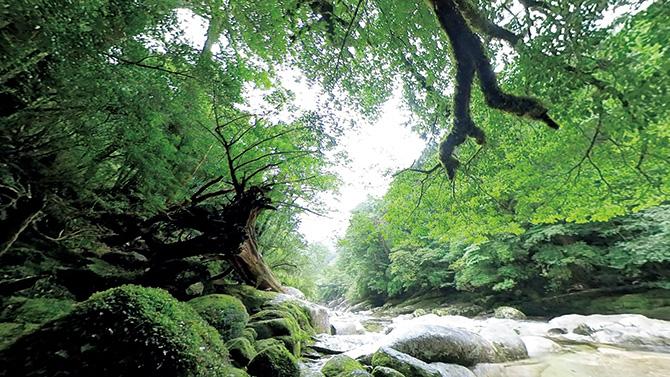映像・音・香り・風……デジタル森林浴に注目