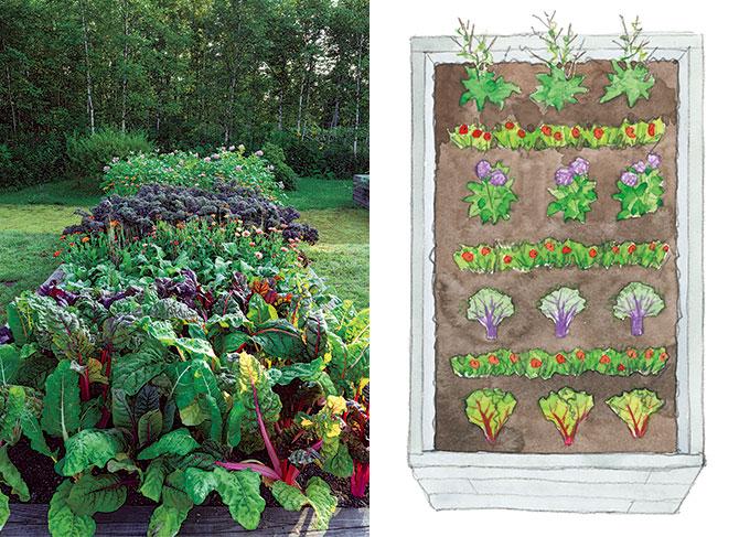 野菜に花を添えたカラフル輪作(ローテーション)で健やかに
