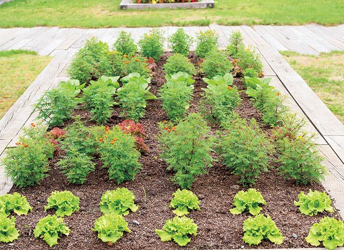 初心者におすすめ。葉物のバラエティ菜園