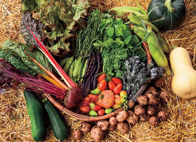 収穫は菜園最大の喜び