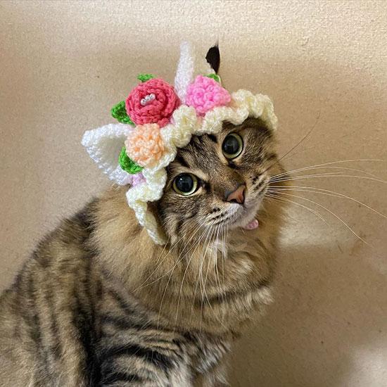 猫だけどネコミミ帽子をかぶってみたよ