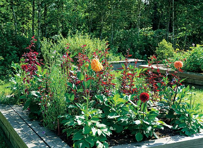 麗しき花摘み庭(カッティングガーデン)の喜び