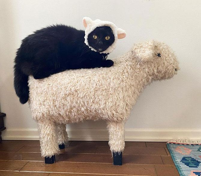 黒猫と羊の美しき友情