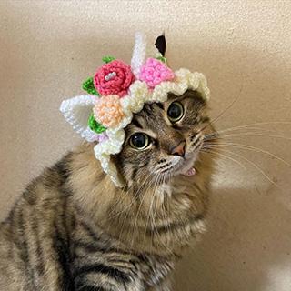 猫だけどネコミミ帽子をかぶってみたよ〔#家庭画報ウチもふ365〕
