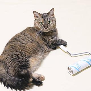 お掃除はボクにお任せください!〔#家庭画報ウチもふ365〕