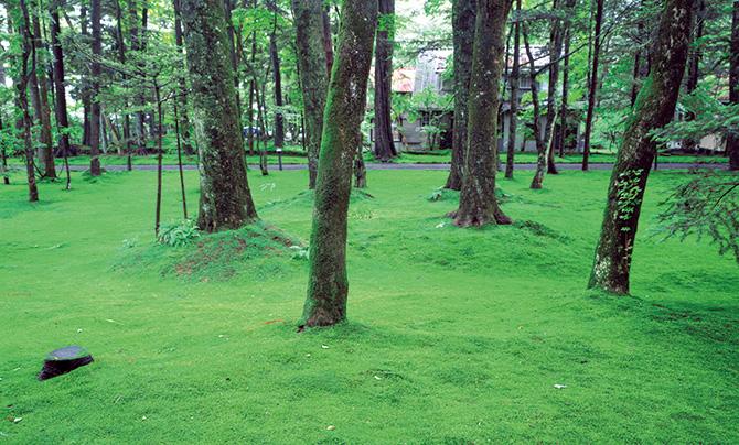 自然に従う──それが軽井沢の正流の作法