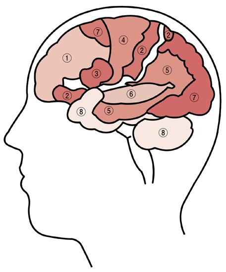 8系統の脳番地の場所
