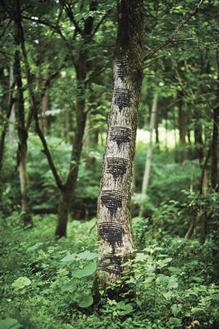 アルテマイスター「会津産漆再生物語(プロジェクト」 国産漆よみがえれ~自然の恵みを活かすものづくり